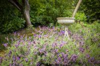 Bright Mystic Valley Lavender & Bird Bath